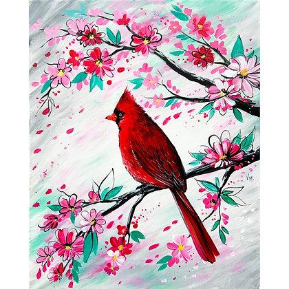 Spring Cardinal - Video Recording