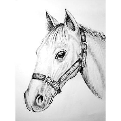 Horse Head - HB Pencil Drawing - Video Recording