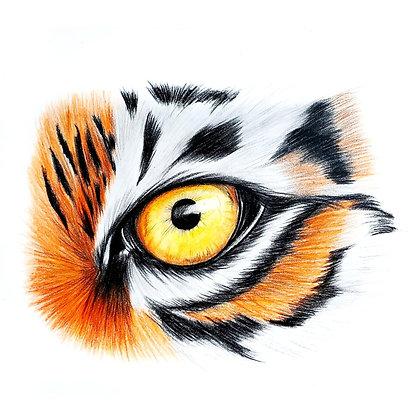 Tiger Eye Drawing - Video Recording