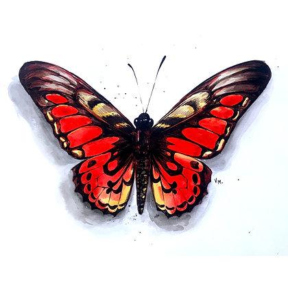 Fiery Butterfly - Video Recording