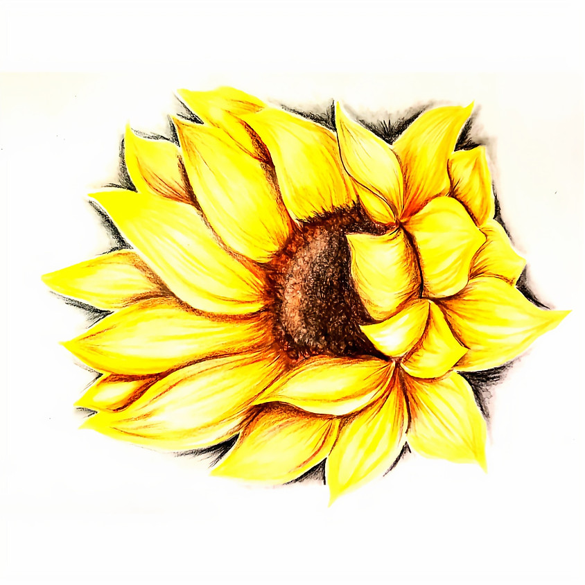 Sunflower - Coloured Pencil Drawing