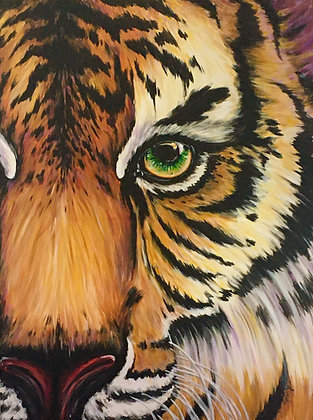 Tiger Eye - Video Recording