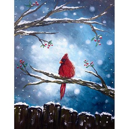 Winter Cardinal - Video Recording