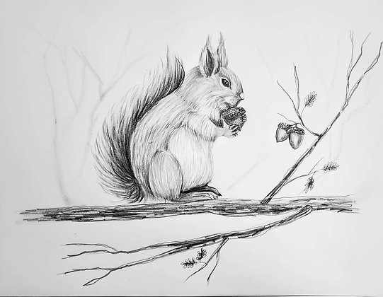 Acorn Squirrel HB Drawing - Video Recording