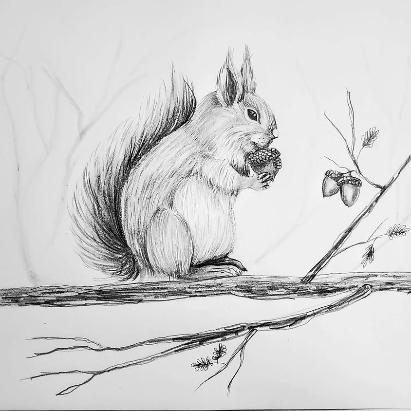Acorn Squirrel - HB Pencil Drawing