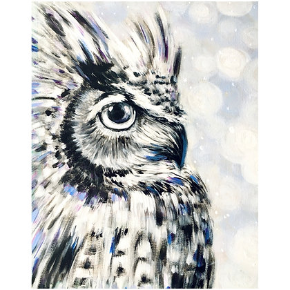 Winter Owl - Video Recording