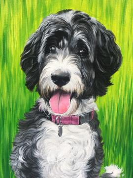 Toronto Pet Portrait Artist