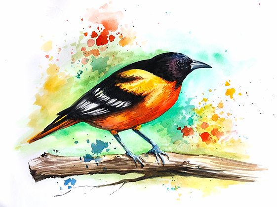 Baltimore Oriole Watercolour - Video Recording