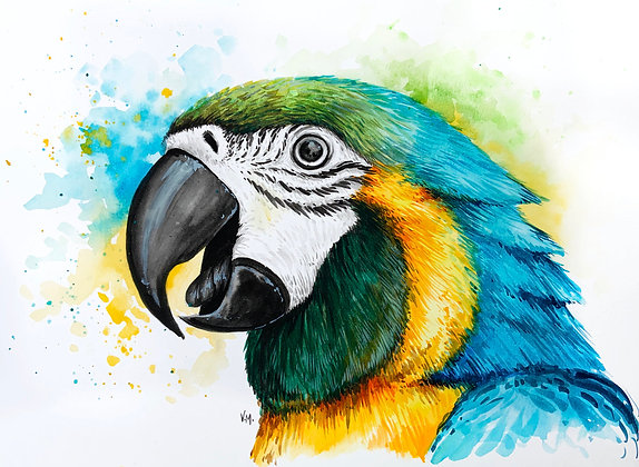 Blue and Gold Macaw Watercolour - Video Recording