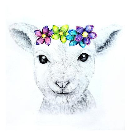 Baby Blossom Lamb - HB Pencil Drawing - Video Recording