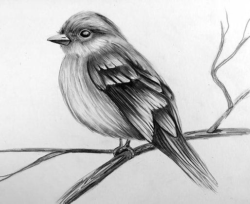 Chubby Chickadee Drawing  - Video Recording