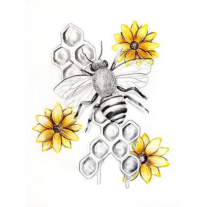 Honey Bee - HB Pencil Drawing - Video Recording