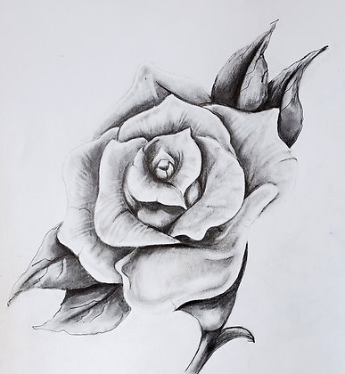 Realistic Rose Drawing - Video Recording