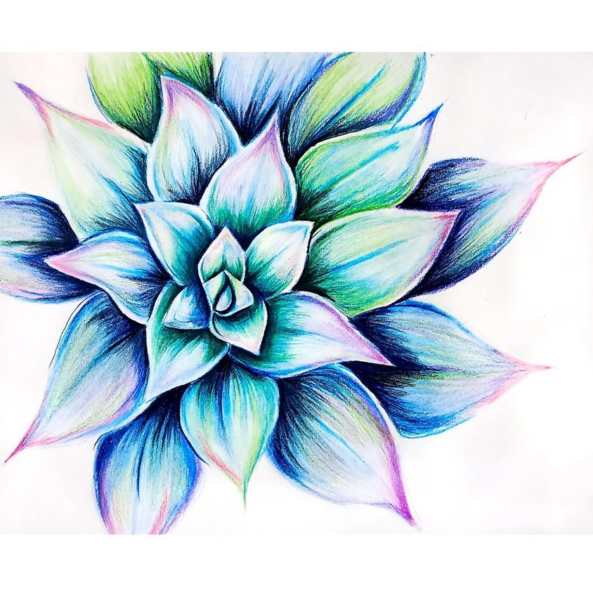 Echeveria - Pencil Crayons Drawing