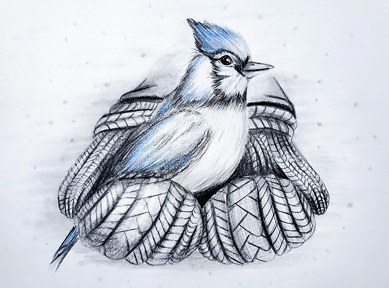 A Bird in the Hand HB Pencil Drawing - Video Recording