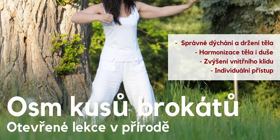 Osm kusů brokátů - letní otevřené lekce