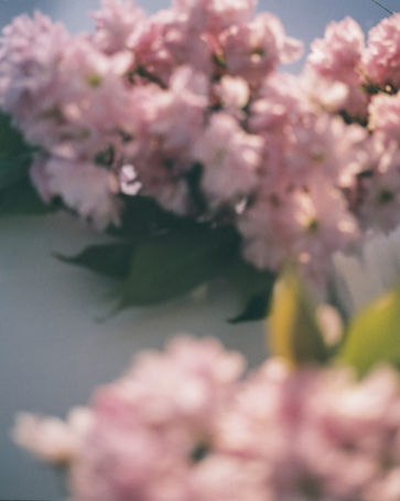 thumbnail_Blossoms-024.jpg
