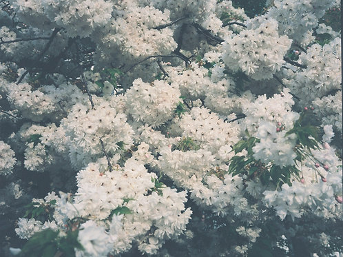 Blossom I Print