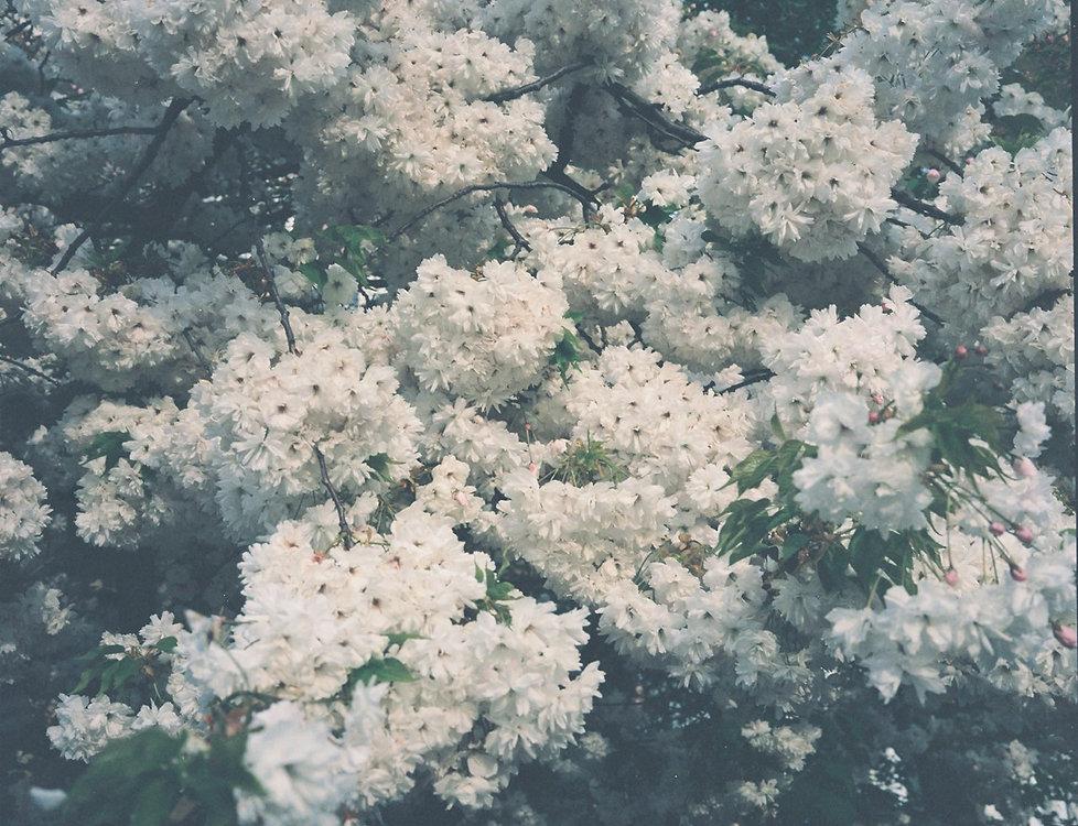 thumbnail_Blossoms-008.jpg