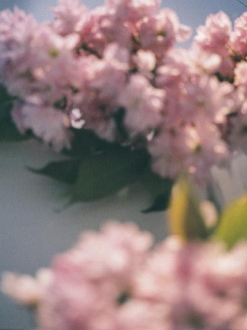 Blossom II Print
