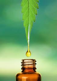 hemp oil leaf.jpg