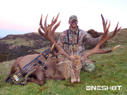 2015-New Zealand Red Stag
