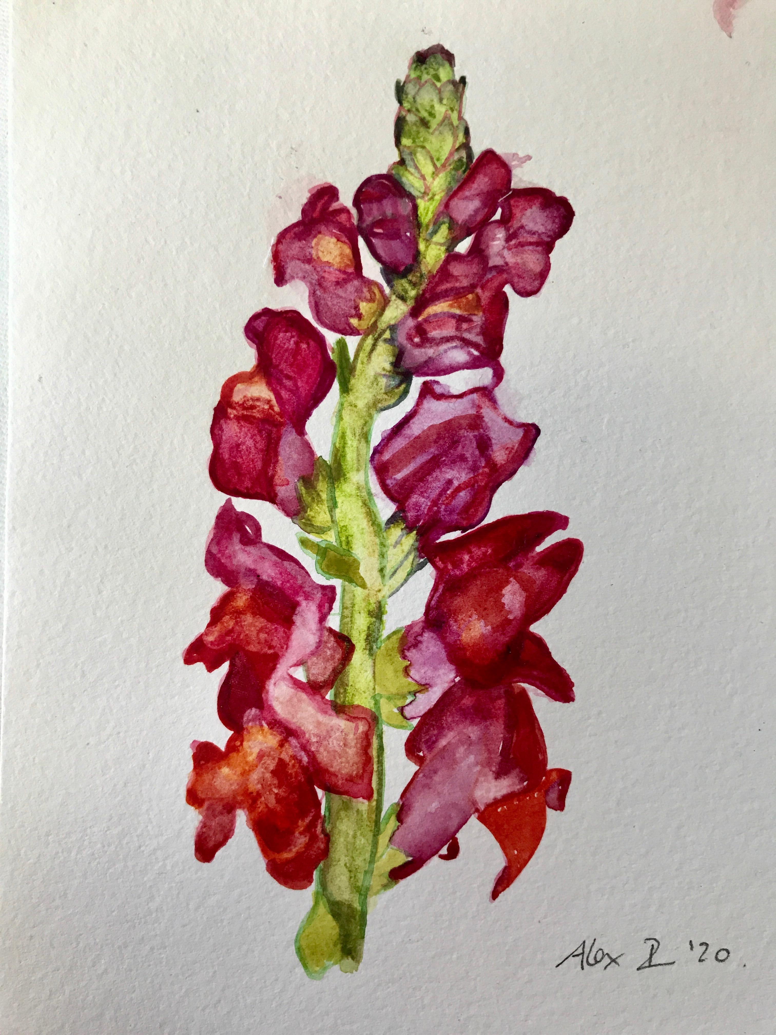 Crimson Flower Stem