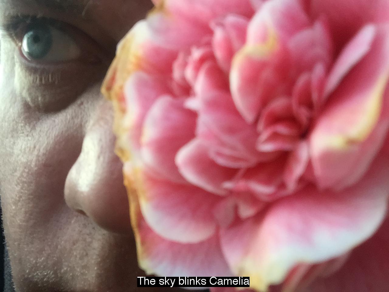 Camelia Eye text