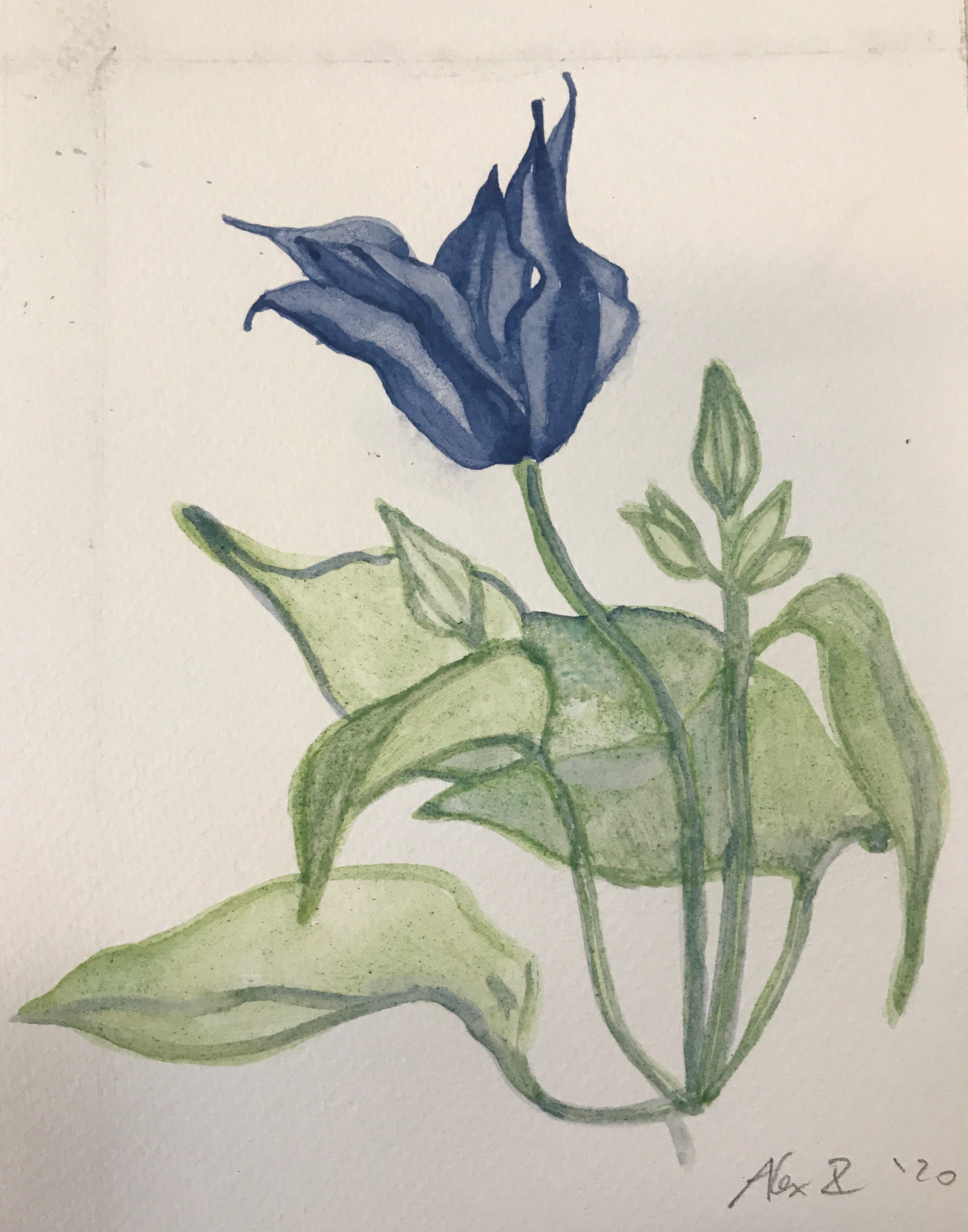 Blue Exotic