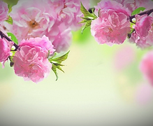 pink%2520flowers_edited_edited.png