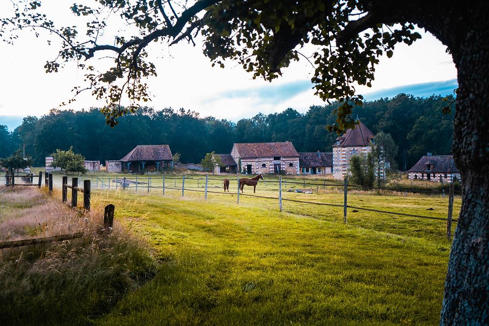 Les chevaux du Domaine d'Argeronne
