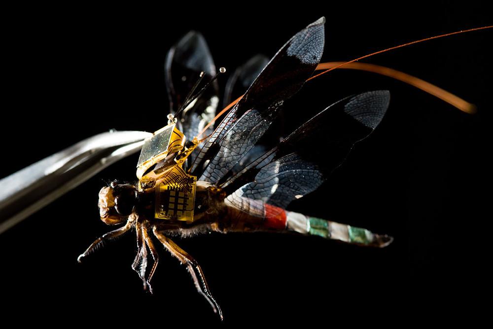 Cyber-libellula drone