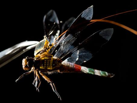 Una libellula cyborg: il più piccolo drone del mondo