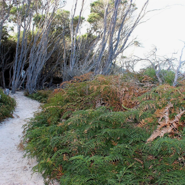 Walking track Wilsons Prom