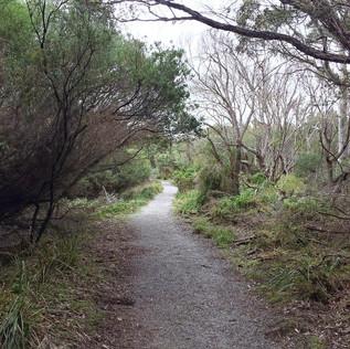Swan lake walking track