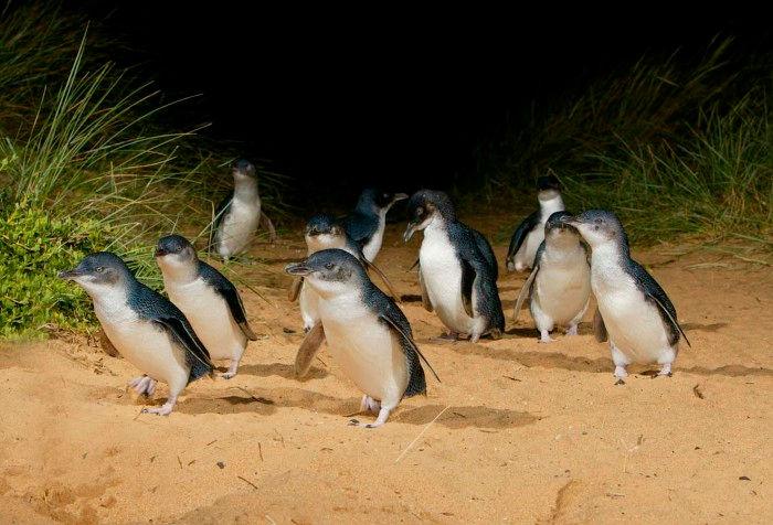 Phillip Island Wine & Nature Tour