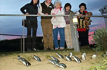 penguins-slider3_edited.jpg