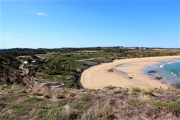Penguin reserve and beach