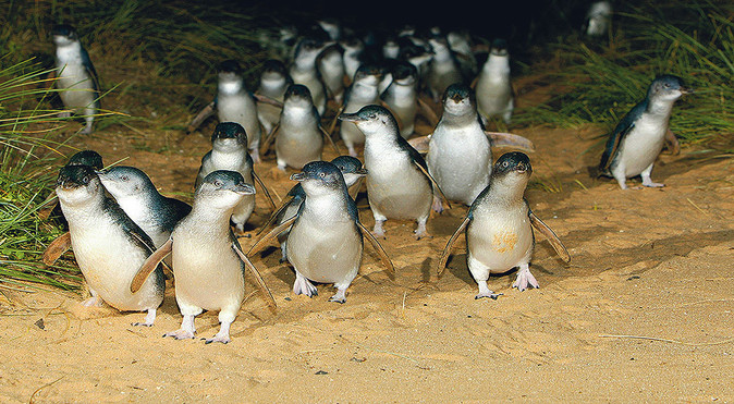 Penguins arriving home