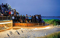 Penguin Plus viewing area
