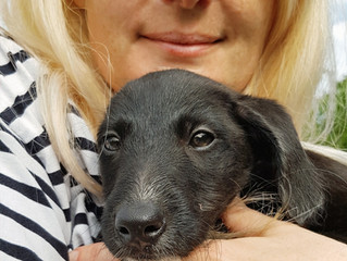 Socialisation for Puppies