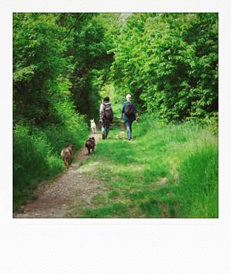 social-walks.png