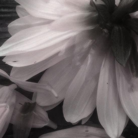lichtysmith_C_flower.jpg