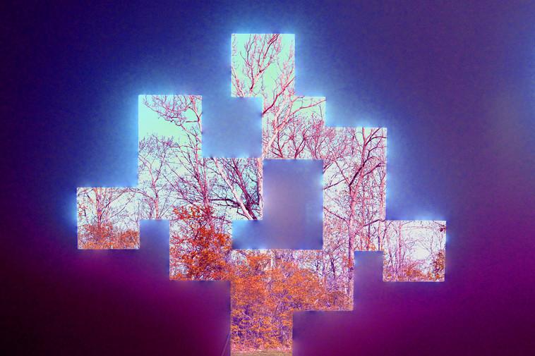 Gray_D_Trees.jpg