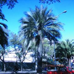 avenidabrasil1.jfif