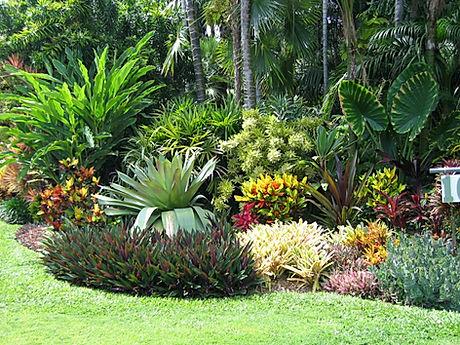 Tropical Landscaping (Foliage, Shrubs, P
