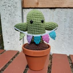 Evergreen Cacti