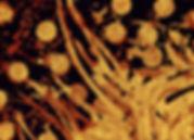 Batik Abstracts