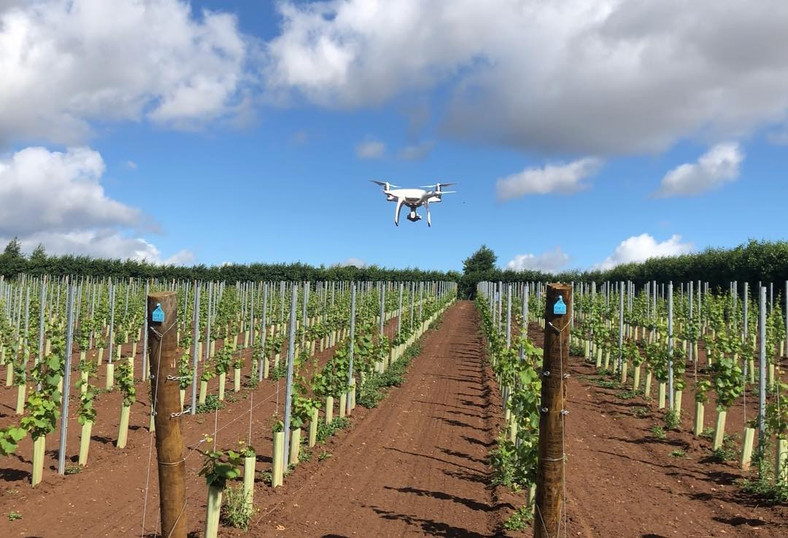 Drone surveying the Vines