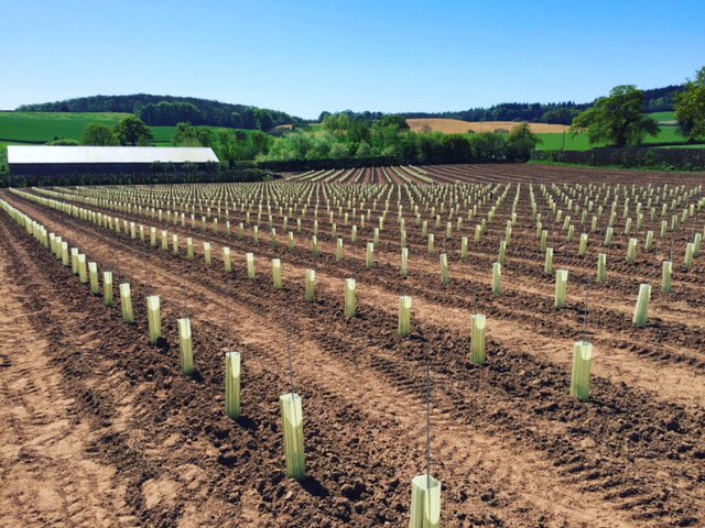 Planting of 15,000 new Vines completed
